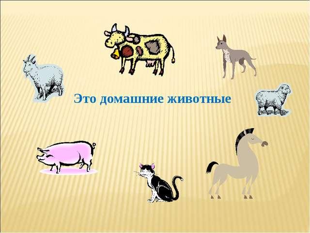 Это домашние животные