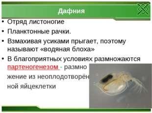 Дафния Отряд листоногие Планктонные рачки. Взмахивая усиками прыгает, поэтому