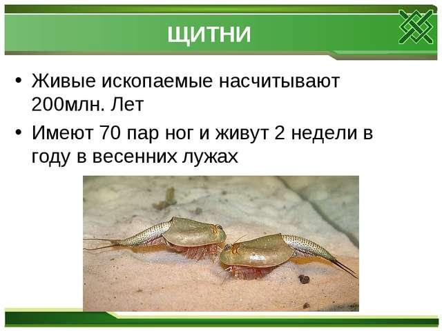 ЩИТНИ Живые ископаемые насчитывают 200млн. Лет Имеют 70 пар ног и живут 2 нед...