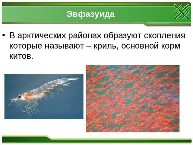 Эвфазуида В арктических районах образуют скопления которые называют – криль,...