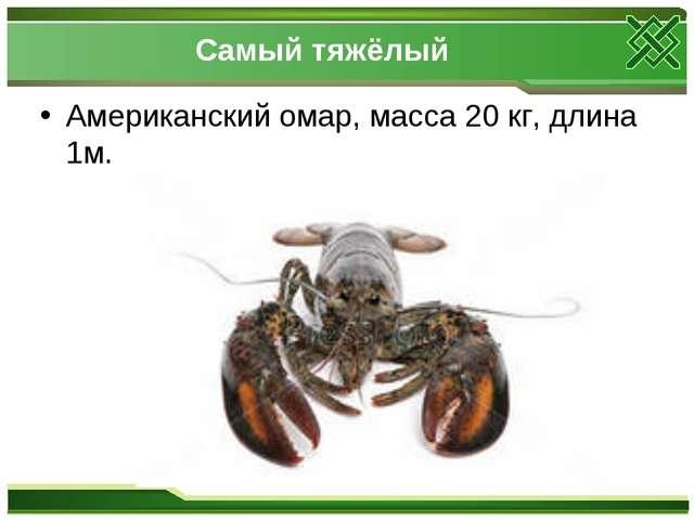 Самый тяжёлый Американский омар, масса 20 кг, длина 1м.
