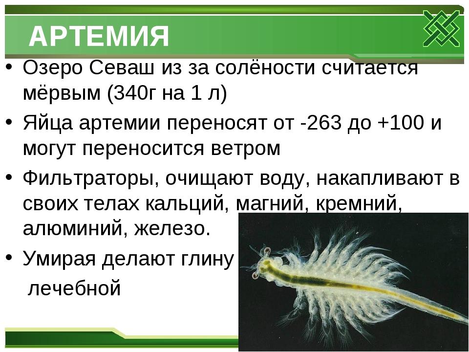 АРТЕМИЯ Озеро Севаш из за солёности считается мёрвым (340г на 1 л) Яйца артем...