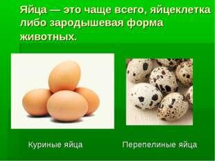 Яйца — это чаще всего, яйцеклетка либо зародышевая форма животных. Куриные яй