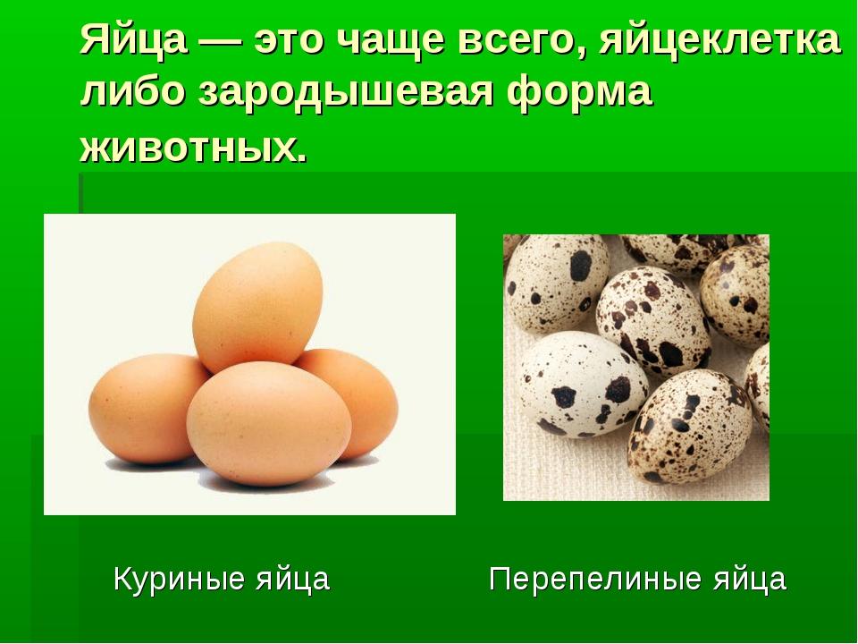 Яйца — это чаще всего, яйцеклетка либо зародышевая форма животных. Куриные яй...