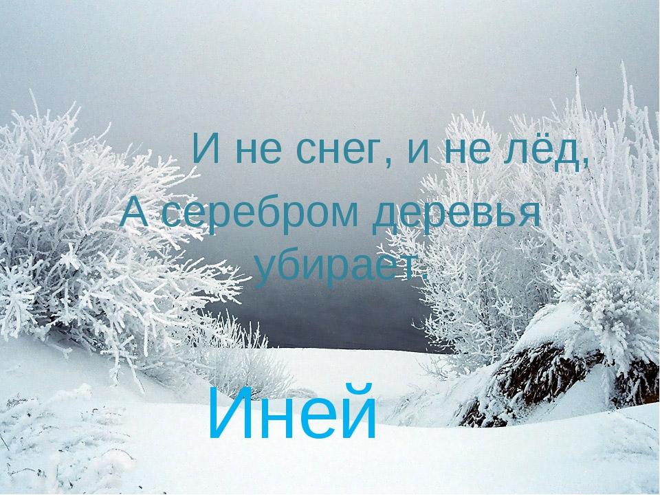И не снег, и не лёд, А серебром деревья убирает. Иней
