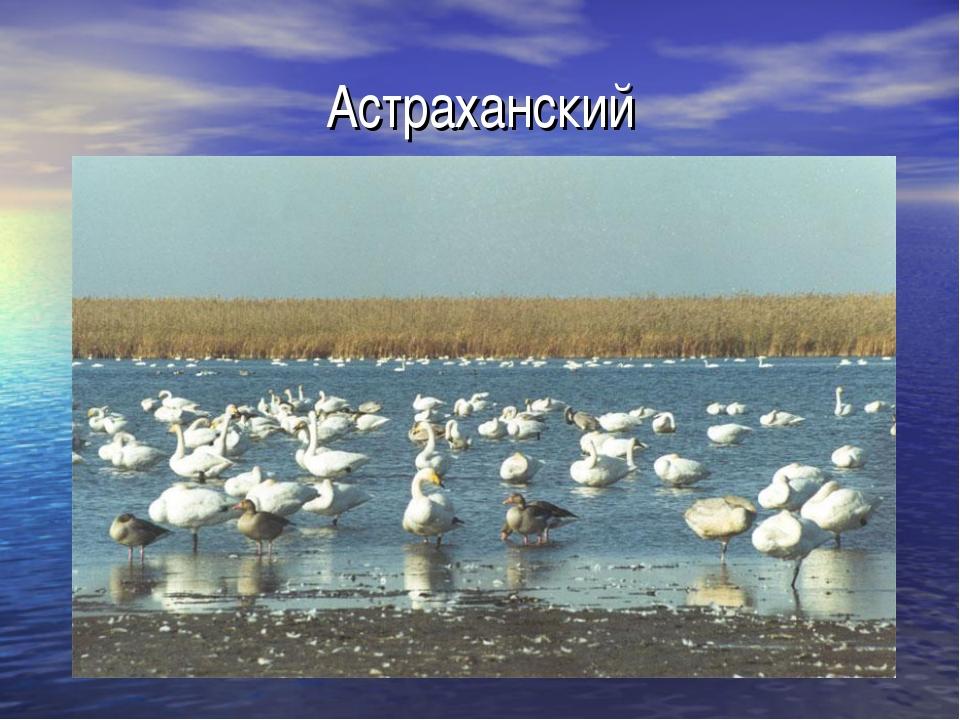 Астраханский