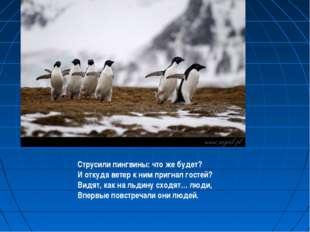 Струсили пингвины: что же будет? И откуда ветер к ним пригнал гостей? Видят,
