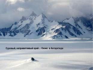 Суровый, неприветливый край… Оазис в Антарктиде