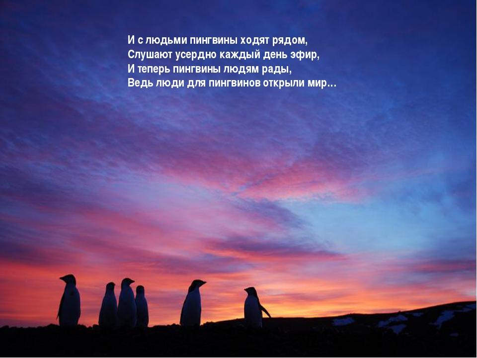 И с людьми пингвины ходят рядом, Слушают усердно каждый день эфир, И теперь п...