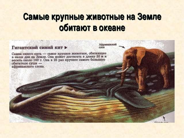 Самые крупные животные на Земле обитают в океане