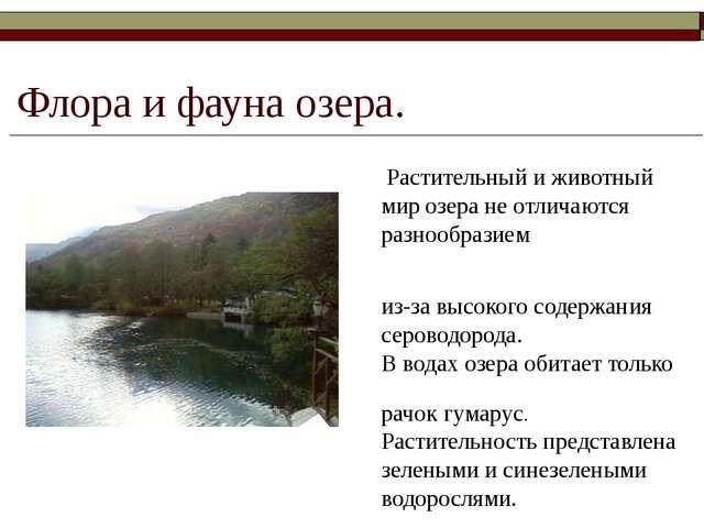 Флора и фауна озера. Растительный и животный мир озера не отличаются разнообр...