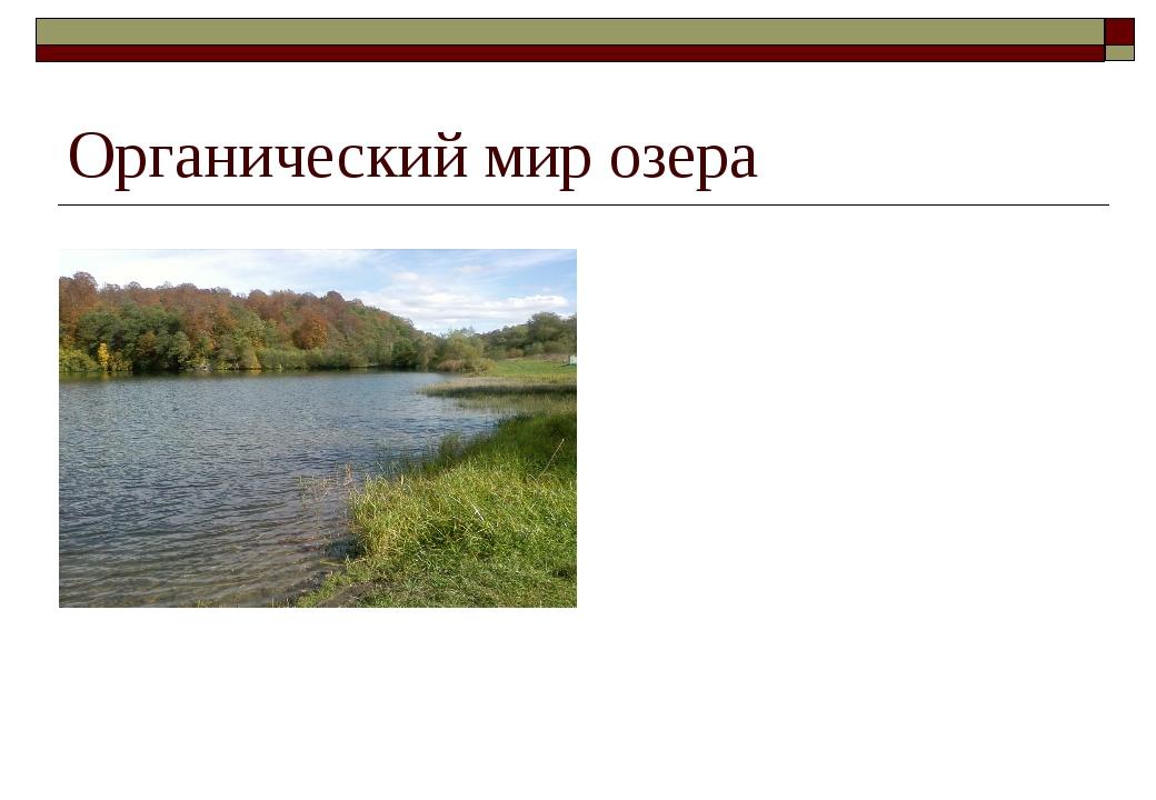 Органический мир озера Основными обитателями озера являются рыбы: форель, пло...
