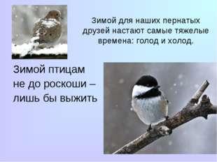 Зимой для наших пернатых друзей настают самые тяжелые времена: голод и холод.