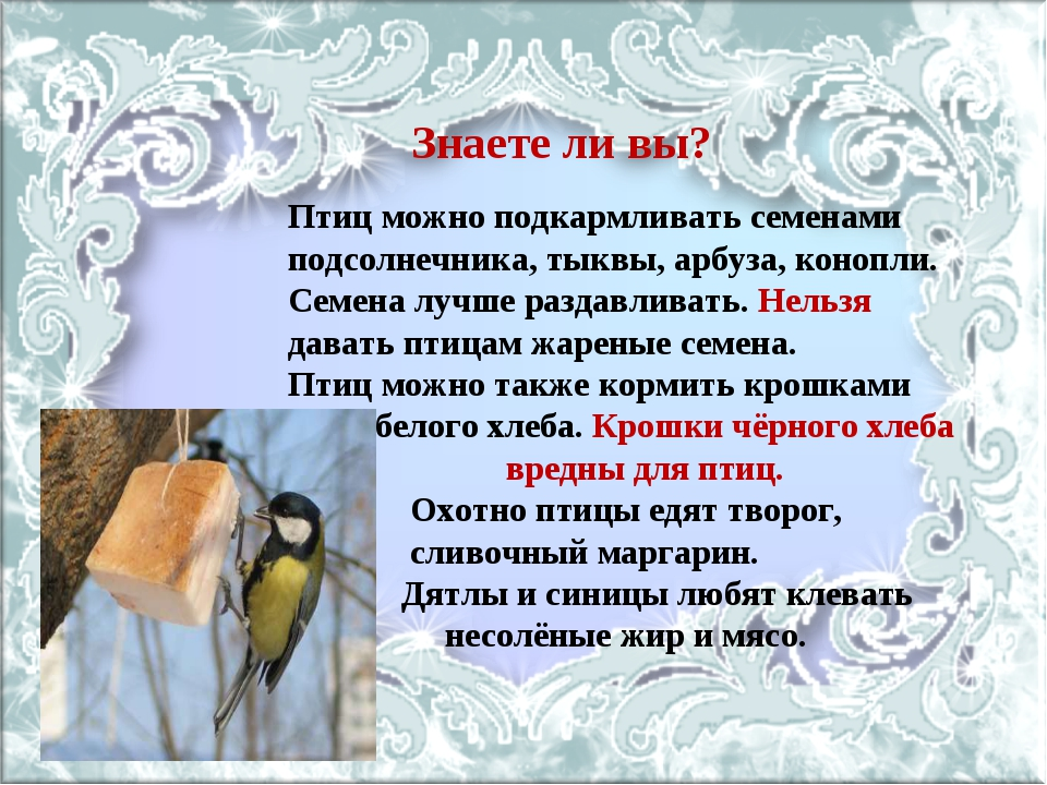 Знаете ли вы? Птиц можно подкармливать семенами подсолнечника, тыквы, арбуза,...