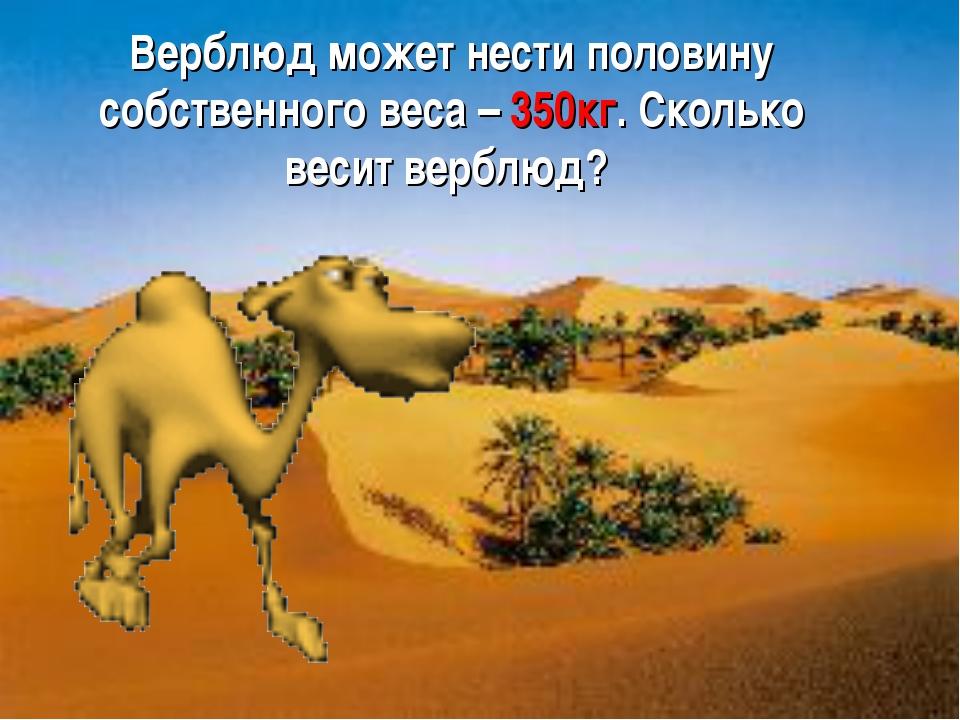 Верблюд может нести половину собственного веса – 350кг. Сколько весит верблюд?