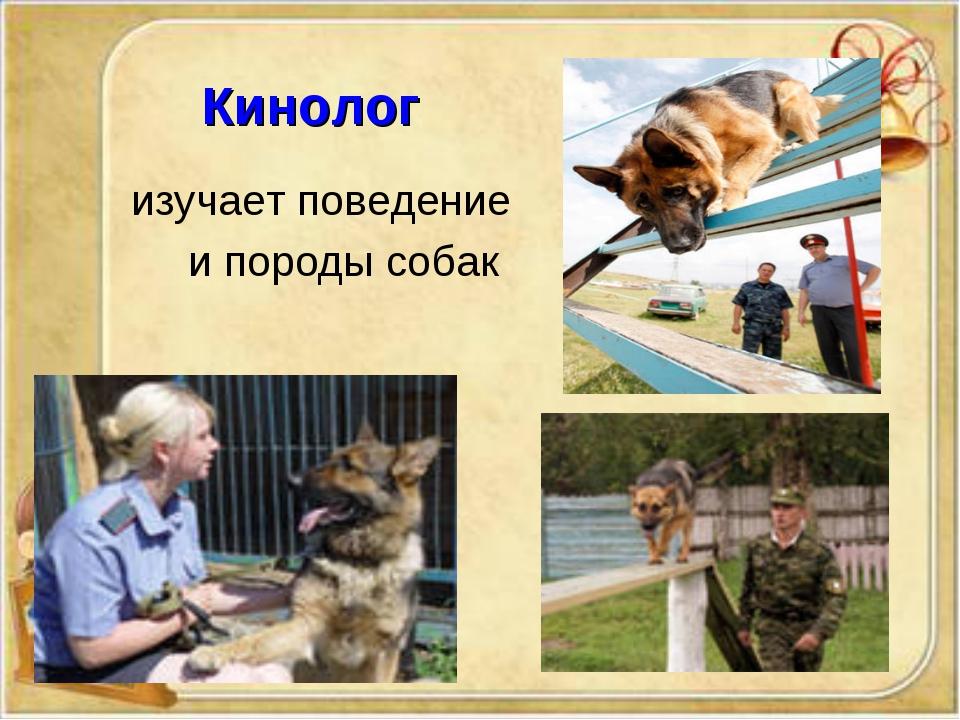 Кинолог изучает поведение и породы собак