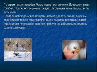 По утрам галдят воробьи. Часто прилетают синички. Возможен визит голубей. При