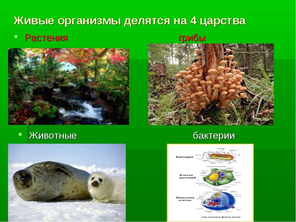 Живые организмы делятся на 4 царства Растения грибы Животные бактерии
