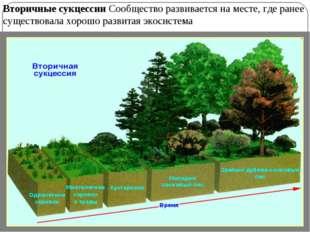 Вторичные сукцессии Сообщество развивается на месте, где ранее существовала х