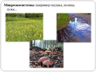 Микроэкосистемы: например опушка, поляна, лужа...