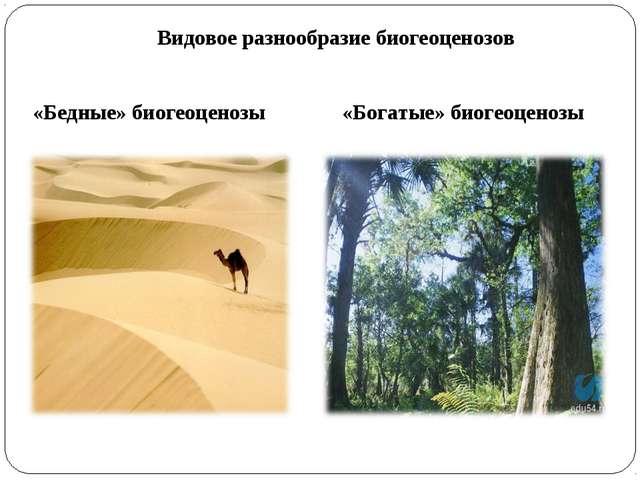 Видовое разнообразие биогеоценозов «Бедные» биогеоценозы «Богатые» биогеоценозы
