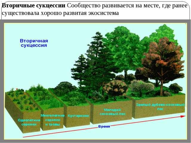 Вторичные сукцессии Сообщество развивается на месте, где ранее существовала х...