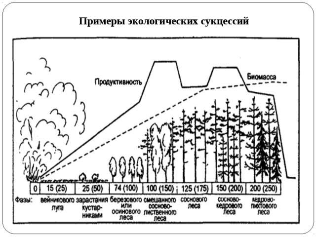 Примеры экологических сукцессий
