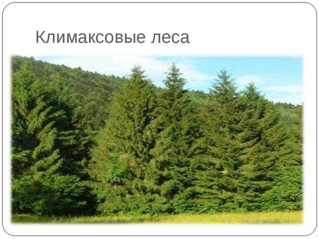 Климаксовые леса