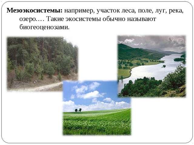 Мезоэкосистемы: например, участок леса, поле, луг, река, озеро.… Такие экосис...