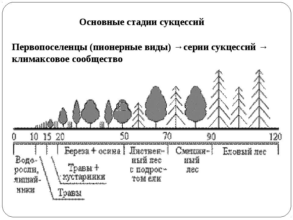 Основные стадии сукцессий Первопоселенцы (пионерные виды) →серии сукцессий →...