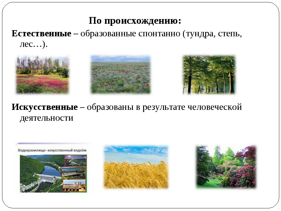 По происхождению: Естественные – образованные спонтанно (тундра, степь, лес…)...