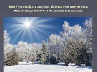 Зимой лес как будто засыпает. Деревья спят зимним сном, многие птицы улетели