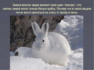 Зимой многие звери меняют свой цвет. Смотри – это зайчик зимой носит только б