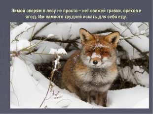 Зимой зверям в лесу не просто – нет свежей травки, орехов и ягод. Им намного