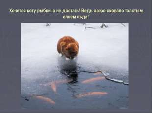 Хочется коту рыбки, а не достать! Ведь озеро сковало толстым слоем льда!