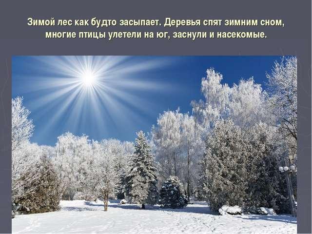 Зимой лес как будто засыпает. Деревья спят зимним сном, многие птицы улетели...