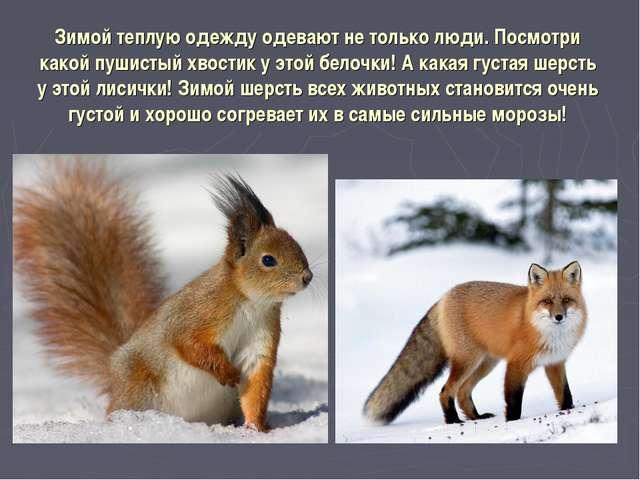 Зимой теплую одежду одевают не только люди. Посмотри какой пушистый хвостик у...