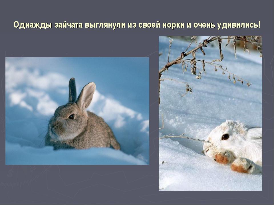 Однажды зайчата выглянули из своей норки и очень удивились!