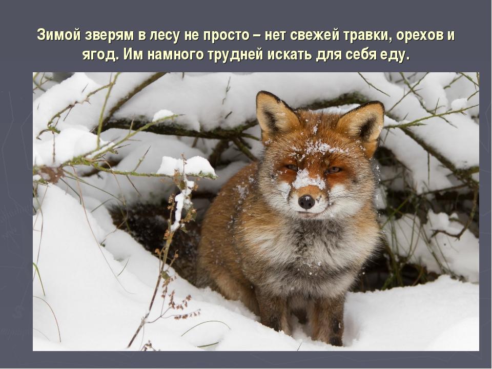 Зимой зверям в лесу не просто – нет свежей травки, орехов и ягод. Им намного...