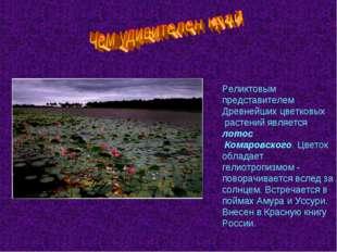 Реликтовым представителем Древнейших цветковых растений является лотос Комаро