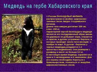 В России белогрудый медведь распространен в хвойно- широколис-твенных лесах А
