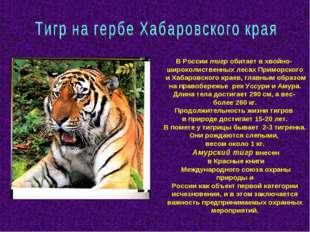 В России тигр обитает в хвойно- широколиственных лесах Приморского и Хабаровс
