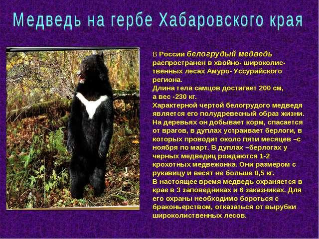 В России белогрудый медведь распространен в хвойно- широколис-твенных лесах А...