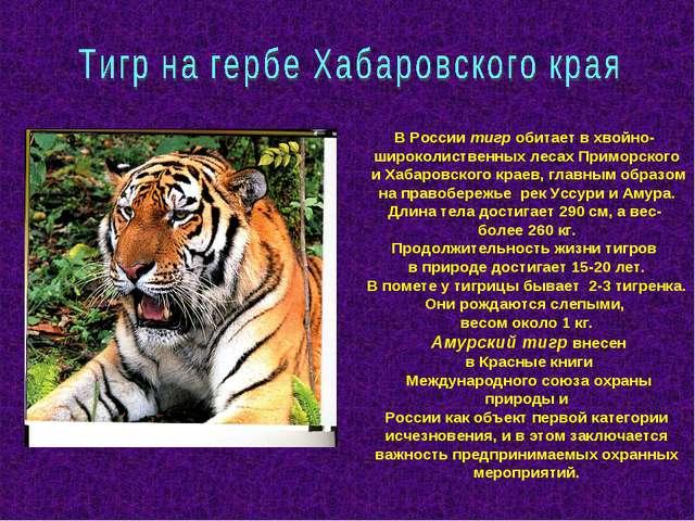 В России тигр обитает в хвойно- широколиственных лесах Приморского и Хабаровс...