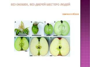 семечки в яблоке