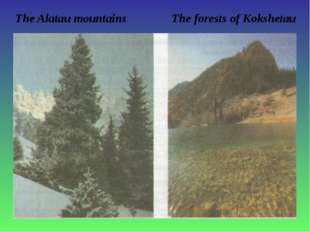 The Alatau mountains The forests of Kokshetau