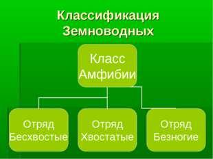 Классификация Земноводных