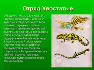 Отряд Хвостатые Объединяет около 280 видов. Это тритоны, саламандры, сирены.