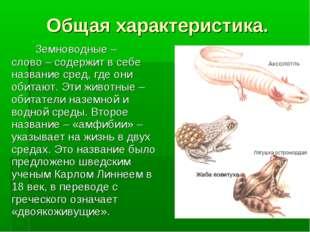 Общая характеристика. Лягушка остромордая Жабаповитуха Земноводные – слово –