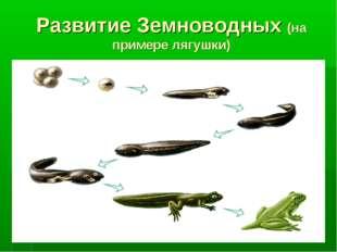 Развитие Земноводных (на примере лягушки)